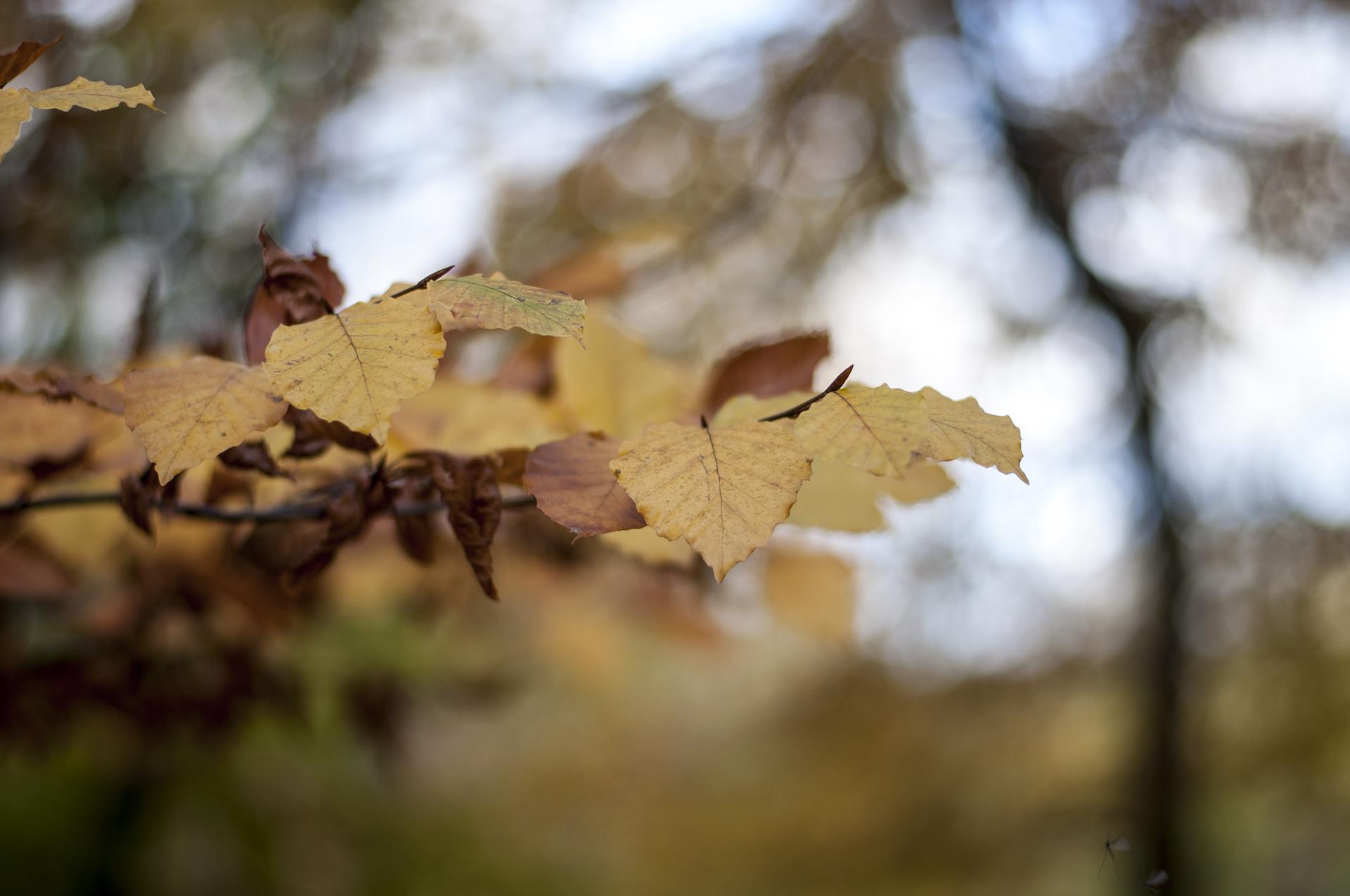 Kalmia center mod stress – skov blad