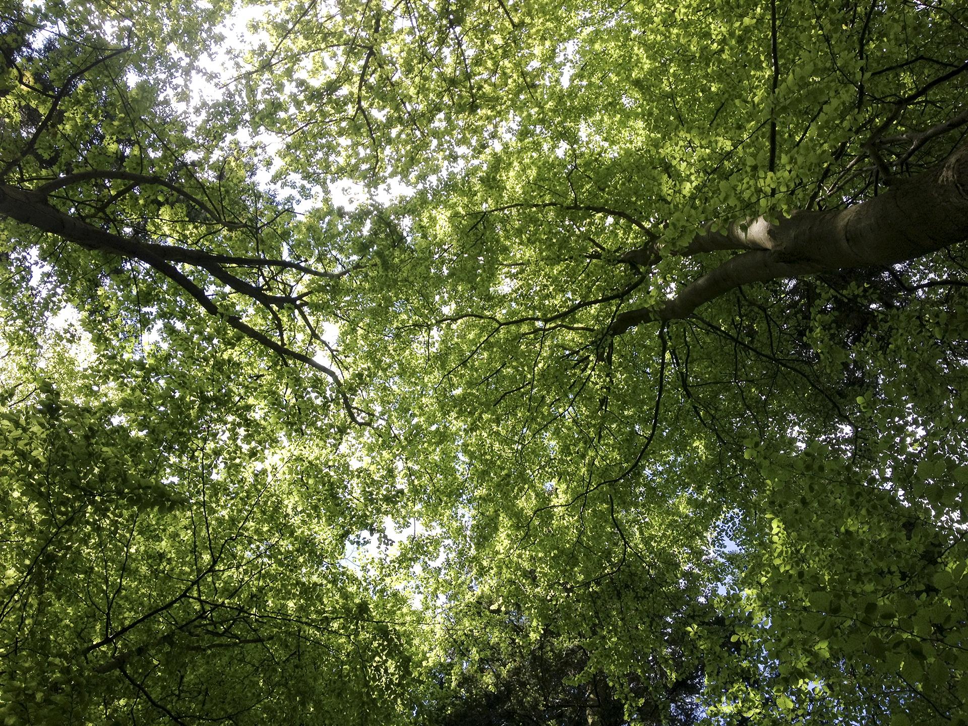 Kalmia center mod stress skov sommer
