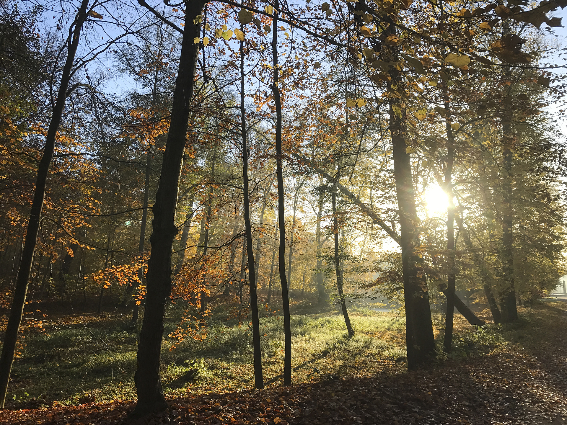 Kalmia center mod stress sol skov