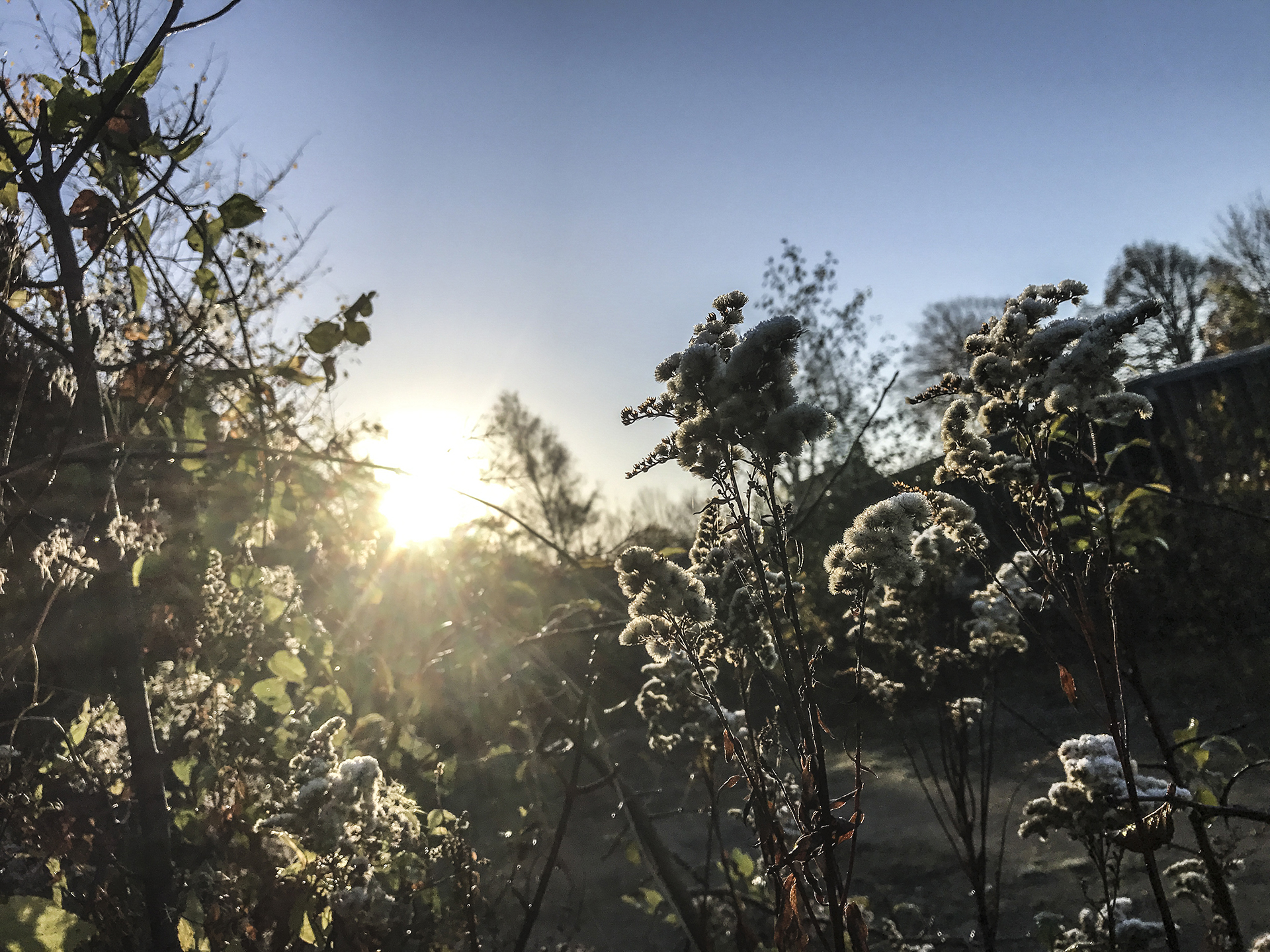 Kalmia center mod stress – sol og frost billede